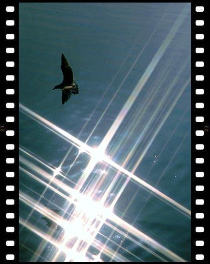 luz y movimiento